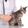 Ветеринарные клиники в Парфино